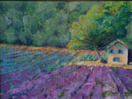 paullin_lavender-field