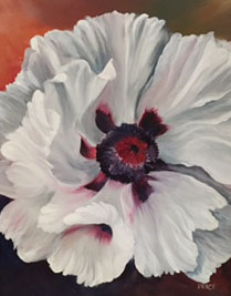 price-white-poppy